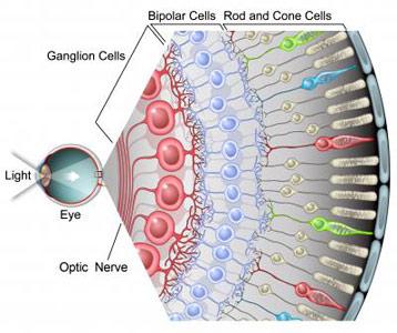 Ganglion Cells